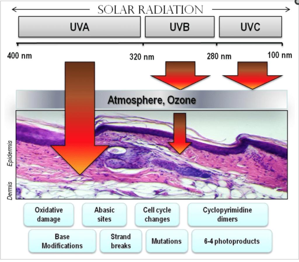 Solar Radiation Vorzeitige Hautalterung UVA UVB