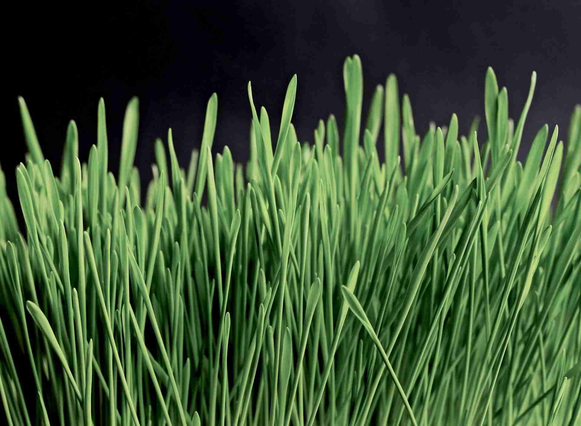 Pflanzenextrakte in Hautpflege
