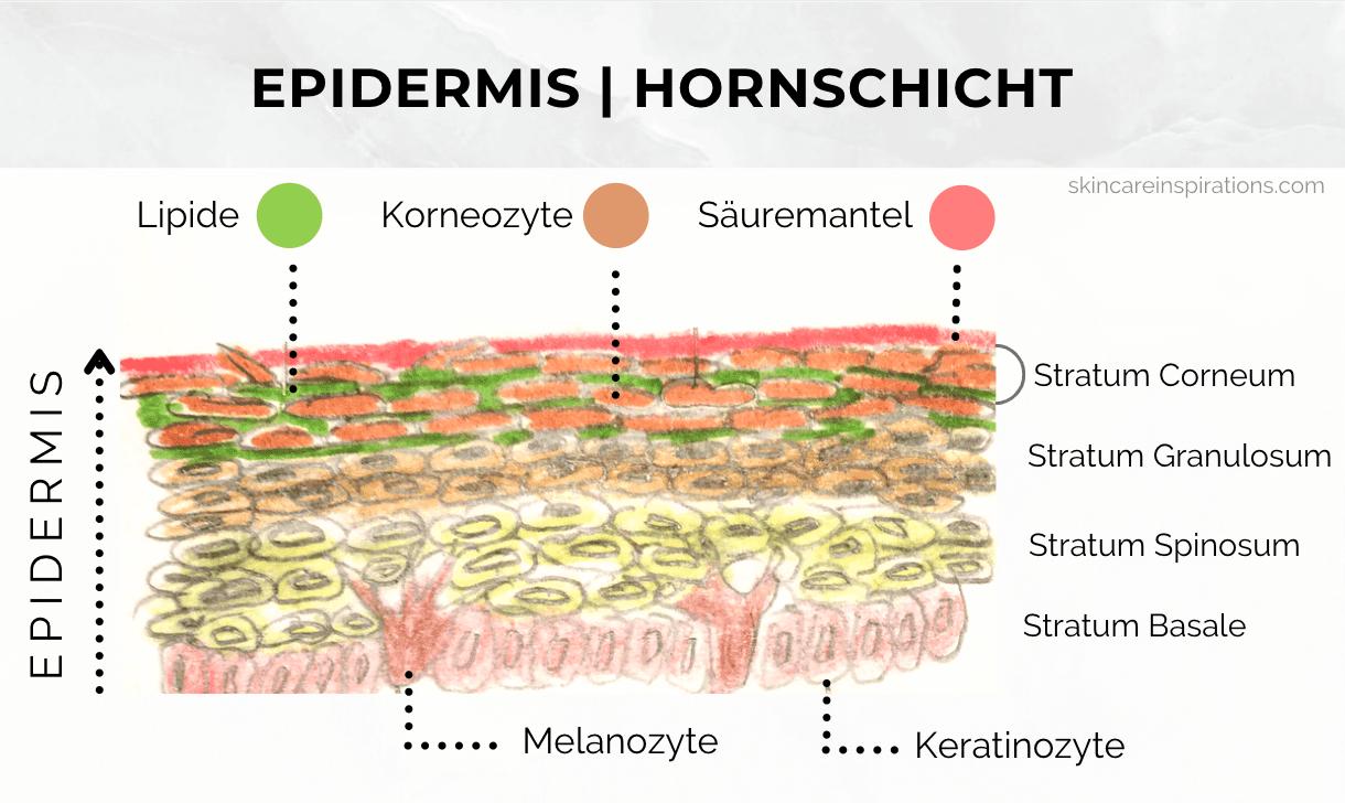 Empfindliche Haut Hornschicht Hautbarriere Säuremantel